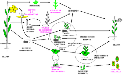 Fragmentacion reproduccion asexual pdf